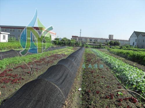 上海金山亭林农田灌溉施工
